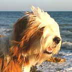 Dog at the Seaside