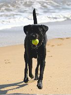 Toby the Dog with Ball