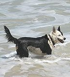Elly the Dog in Water